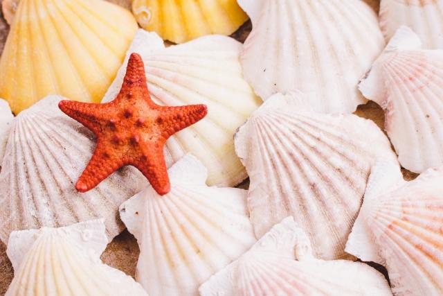 美しい貝殻やヒトデ
